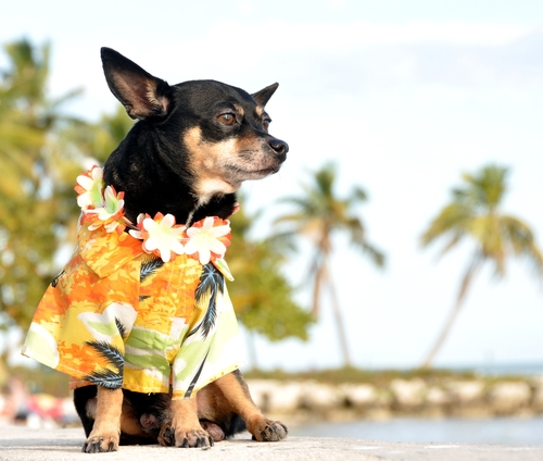 Can You Take Your Dog To Hawaii